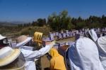 Universidad de Atacama, sede Vallenar, desarrolla innovador proyecto apícola