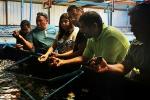 CRIDESAT busca potenciar el cultivo de ostras en Atacama
